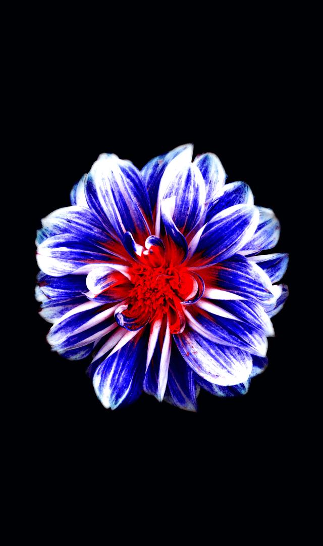 Flowers 3 - 1
