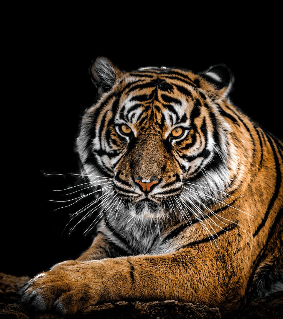 Wild animal pic 26